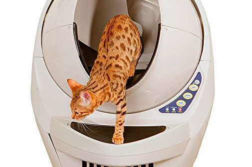Cat getting off a cleaning litter box